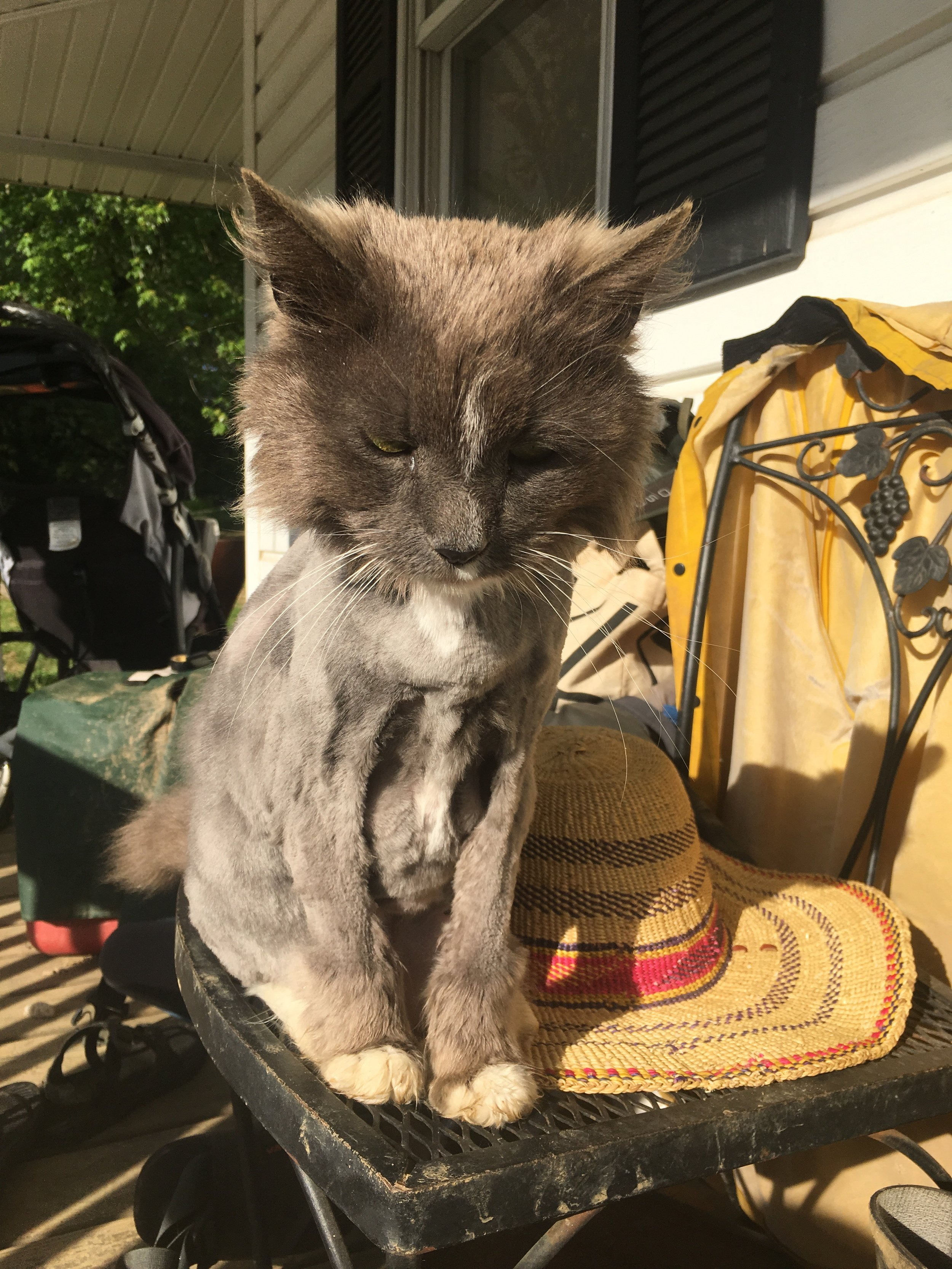 Our sweet farm cat, Gray, received her annual shave this week. She's feeling great and ready for the summer heat!