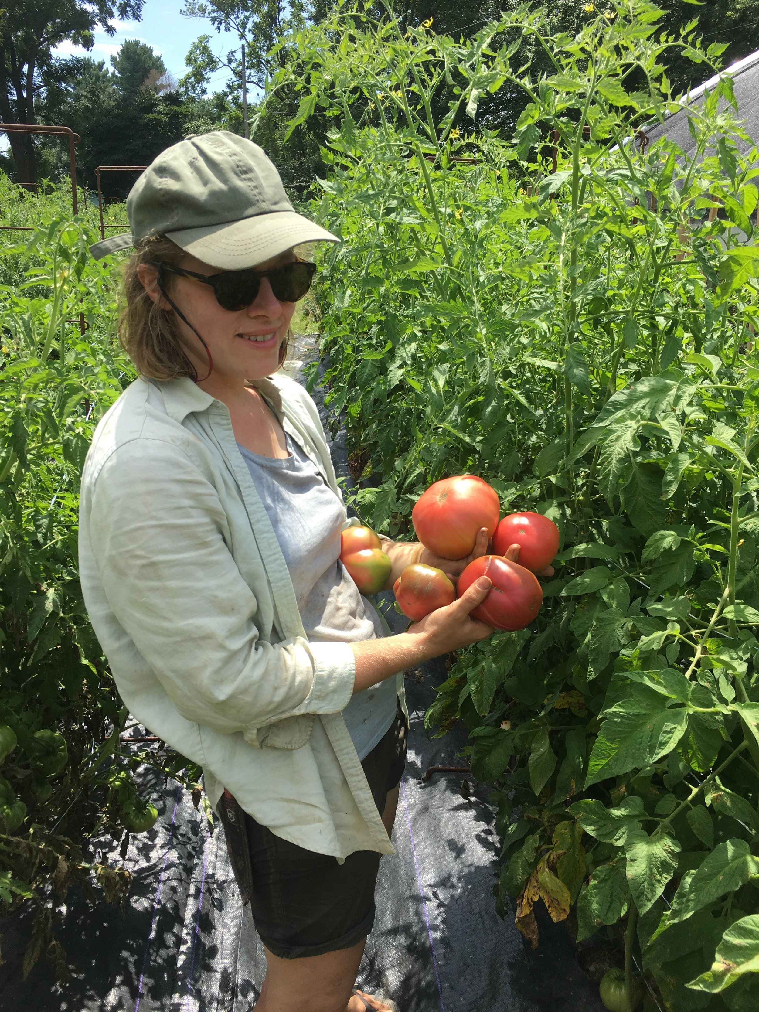 Alison showing off a few of our delicious heirloom tomatoes.