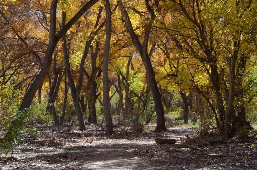 El Bosque Rio Grande