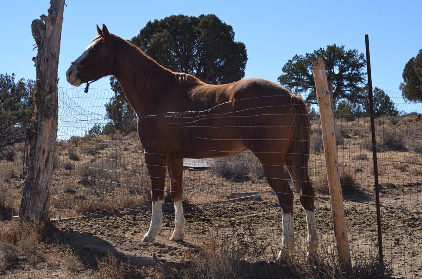 Mary-Katherines horse