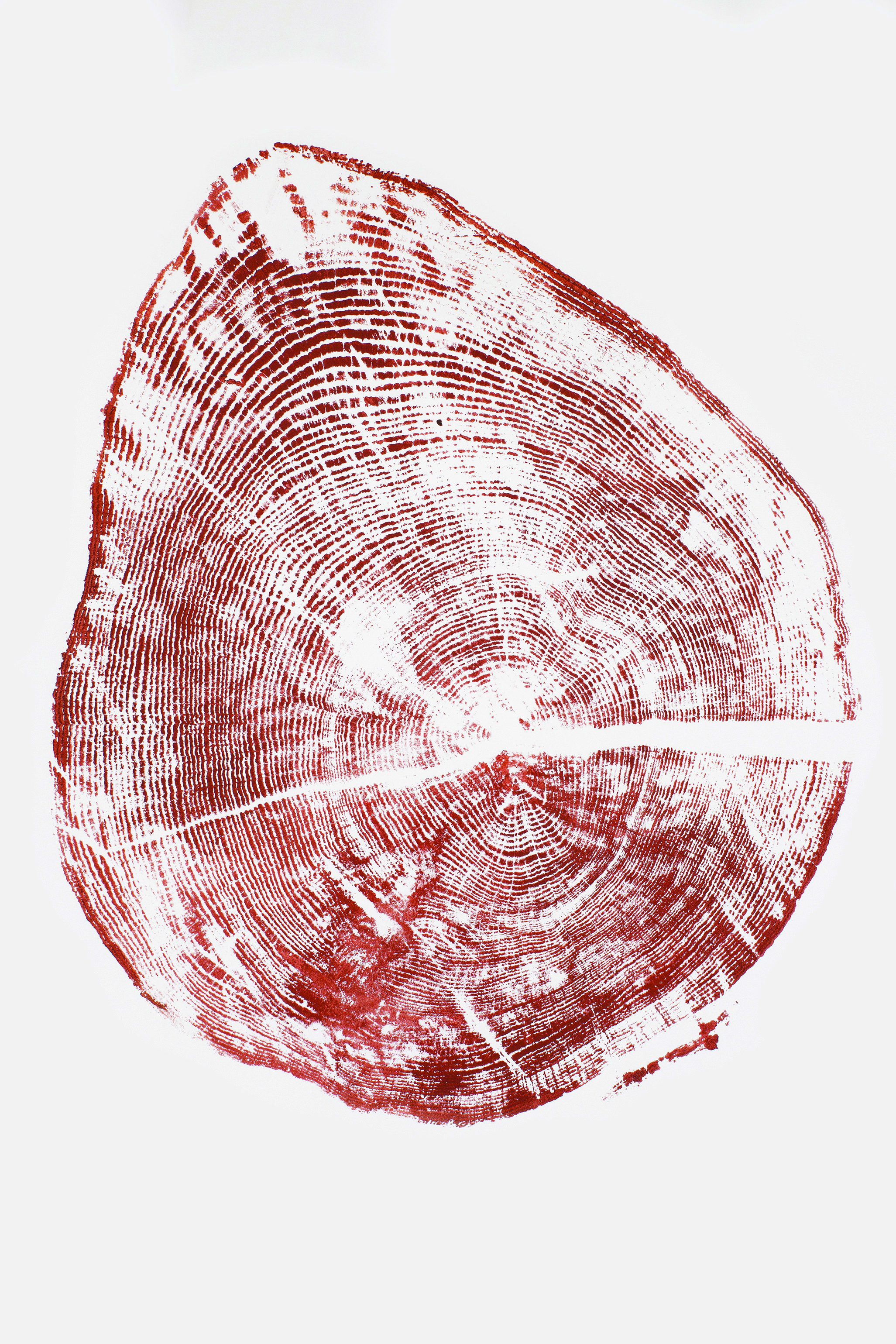 woodstumps_red copy.jpg