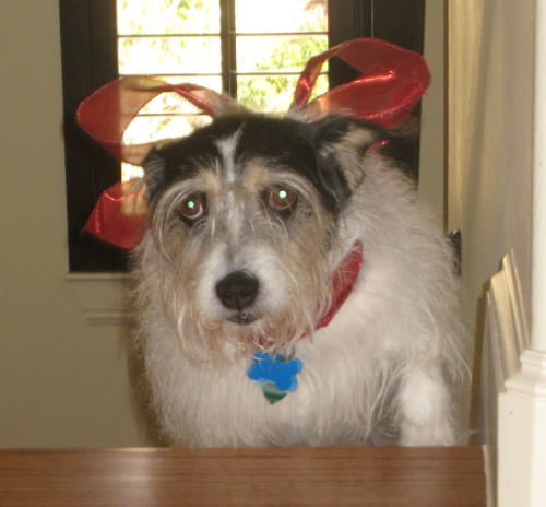 Millie decorated for xmas_0001.jpg