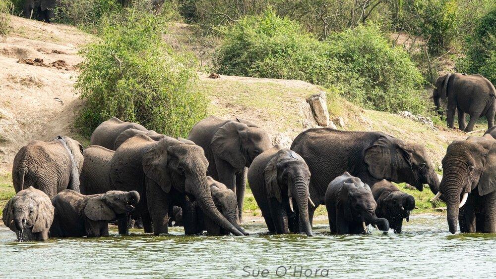 ElephantsDrink_SKO.JPG