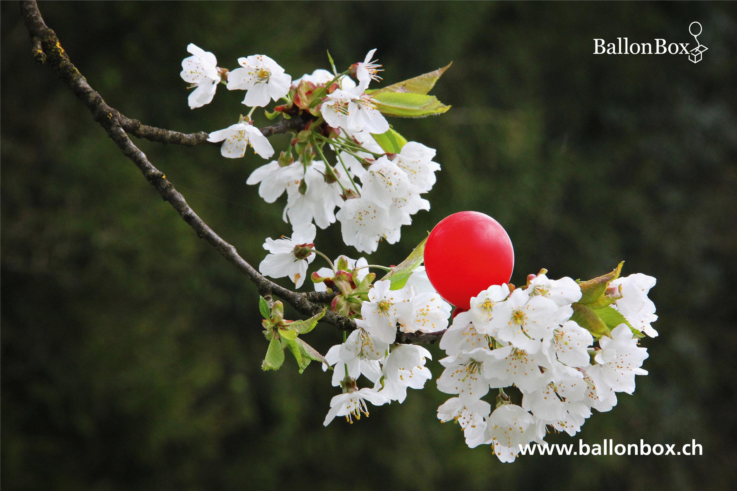 BallonBox_Kalender_17_04.jpg