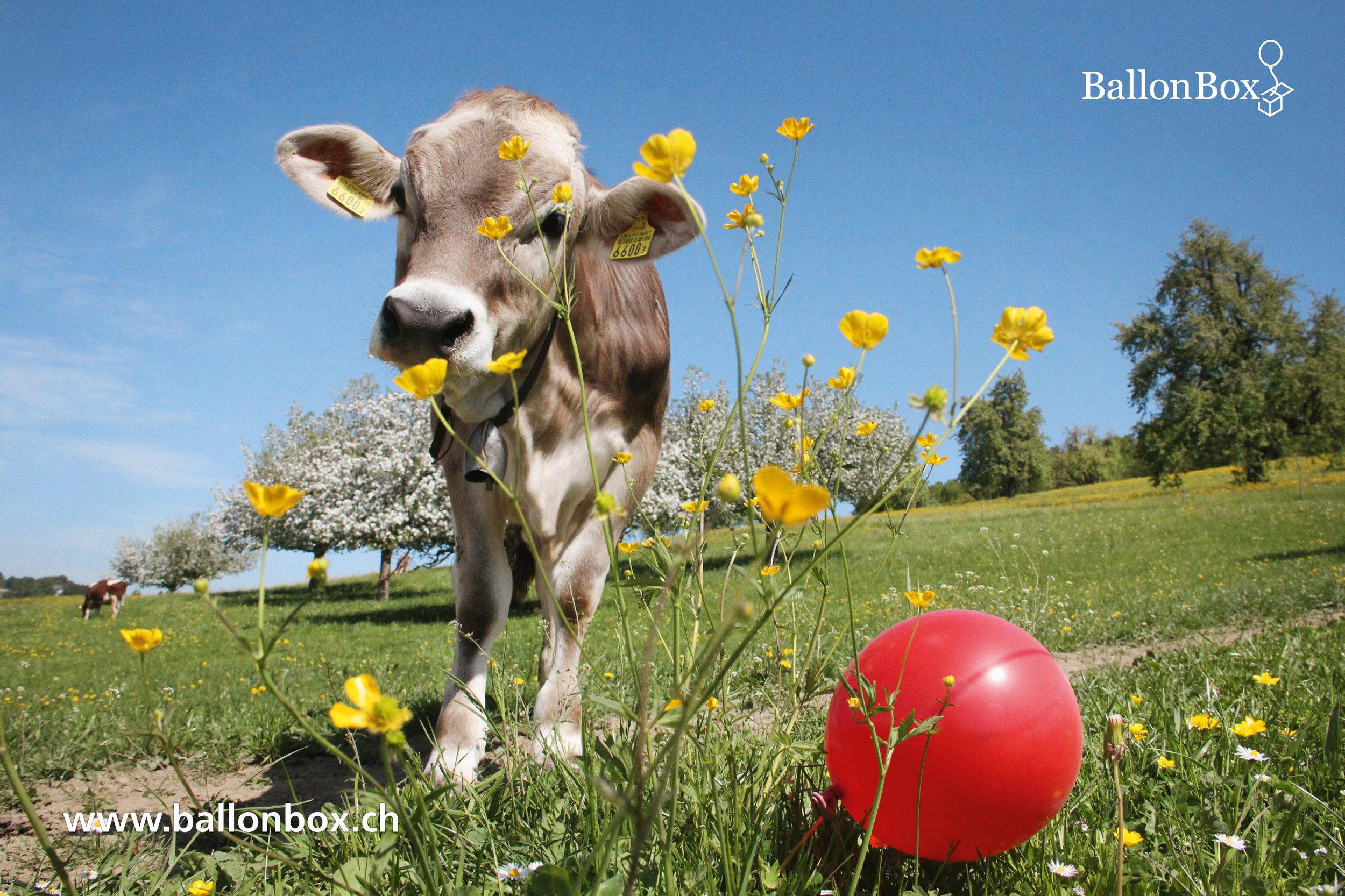 BallonBox_Kalender_19-04.jpg