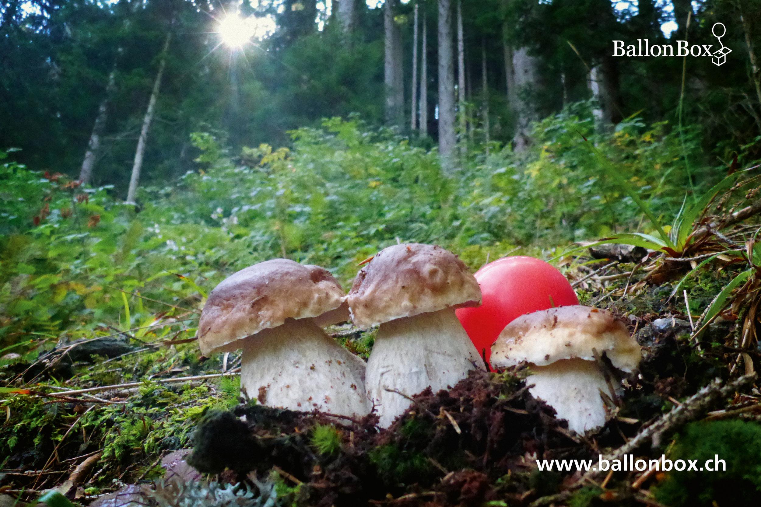 BallonBox_Kalender_19-09.jpg
