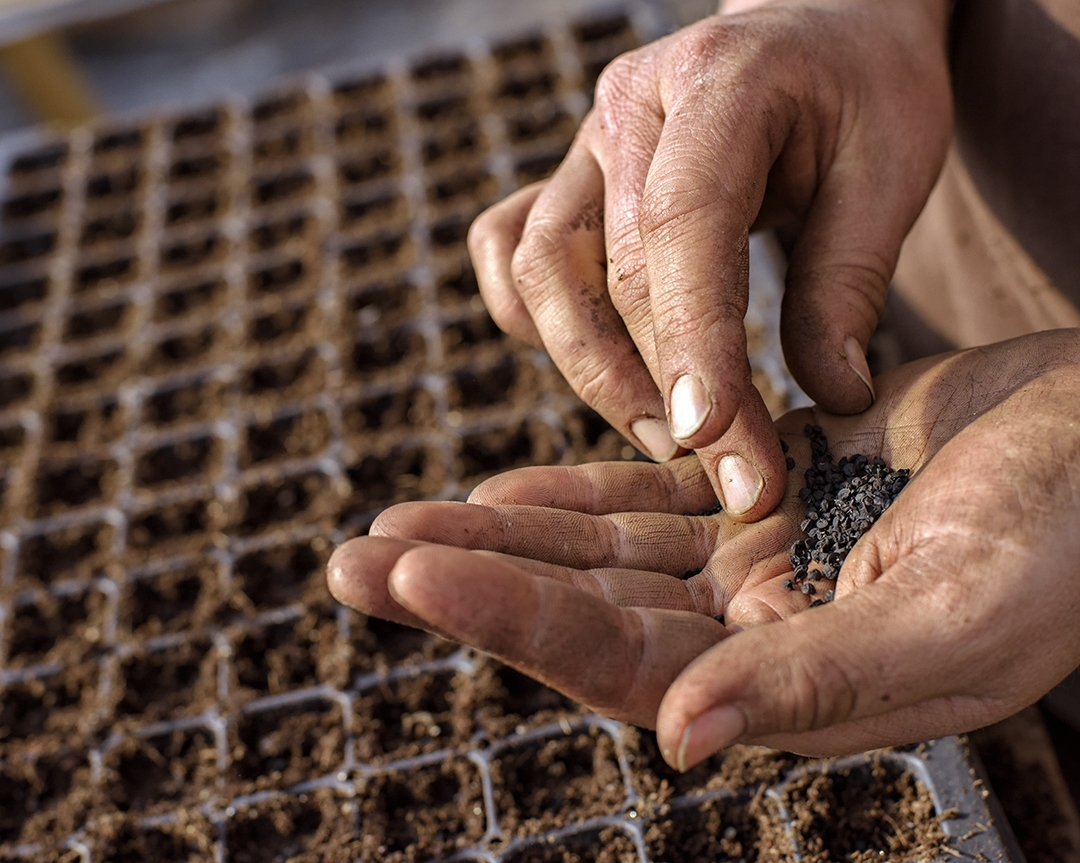"""""""The vegetable farmers I know are obsessed with seed,"""" says Alprilla Farms' Sophie Courser. (Photograph by Paul Cary Goldberg)"""