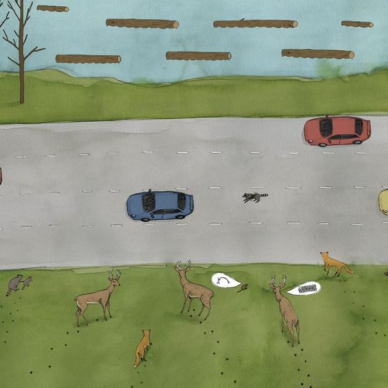 Wildlife Crossings  //  SERIES