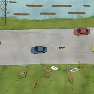 Wildlife Crossing editorial illustrations