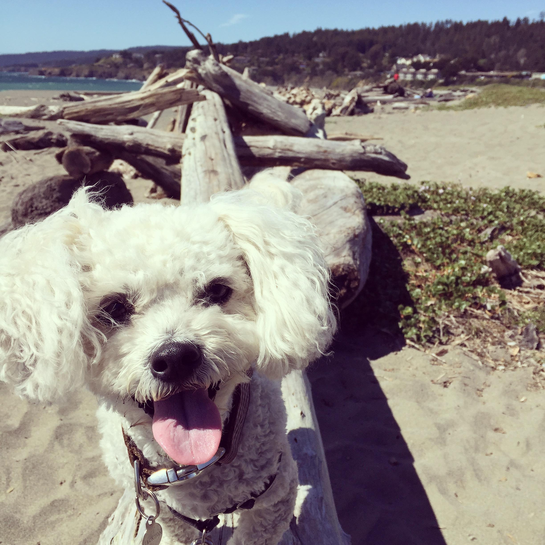 My dog, Jackson, loving his adventure
