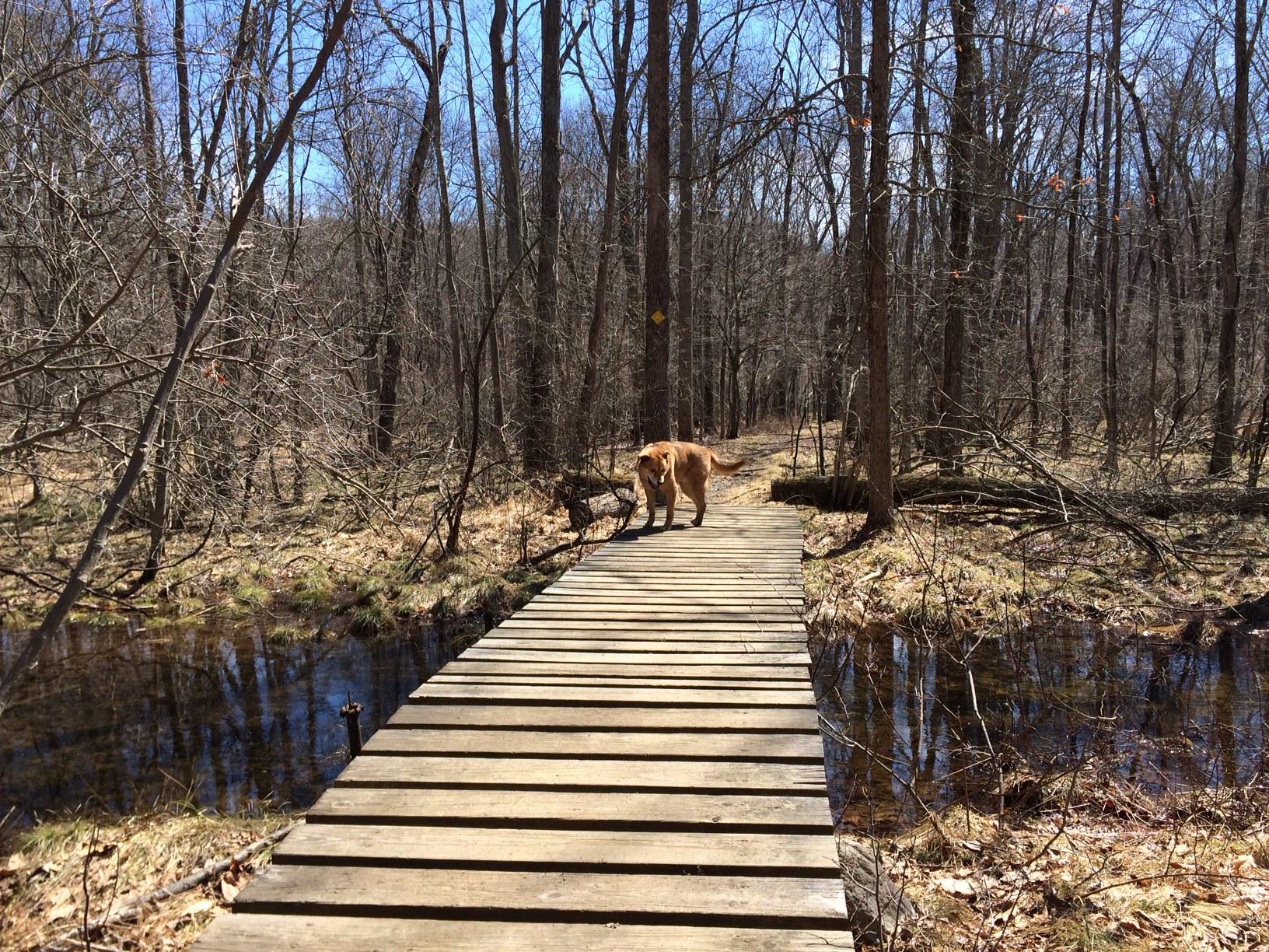 Wood footbridge over Griffen Swamp