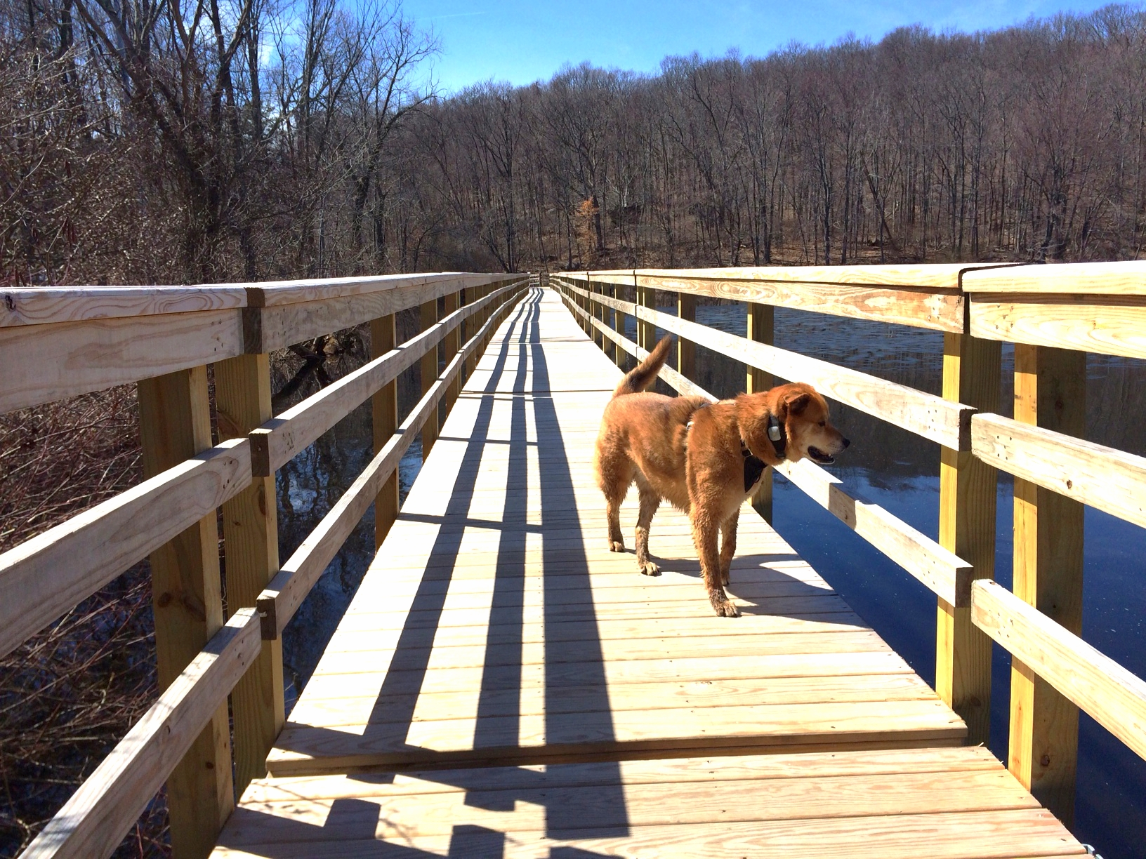Footbridge on the south side of Teatown Lake
