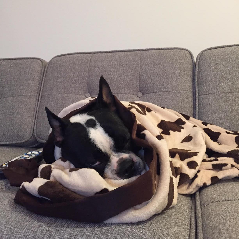 Molly Sleeping.jpg