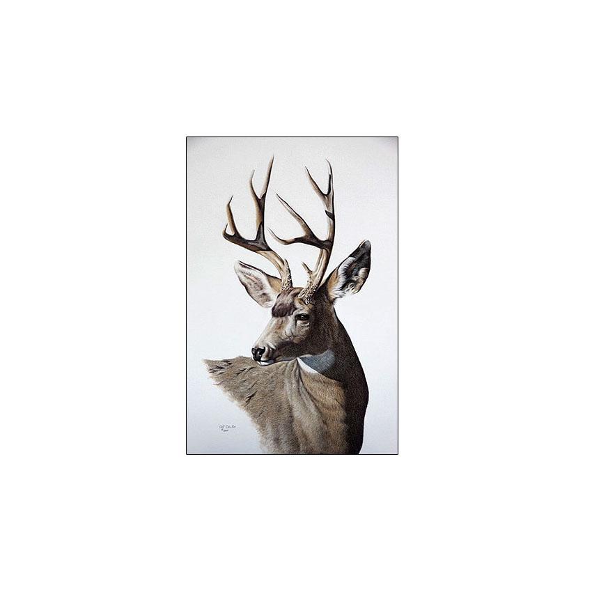 Muley Buck - Sold