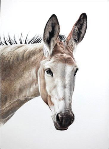 Donkey - Commission