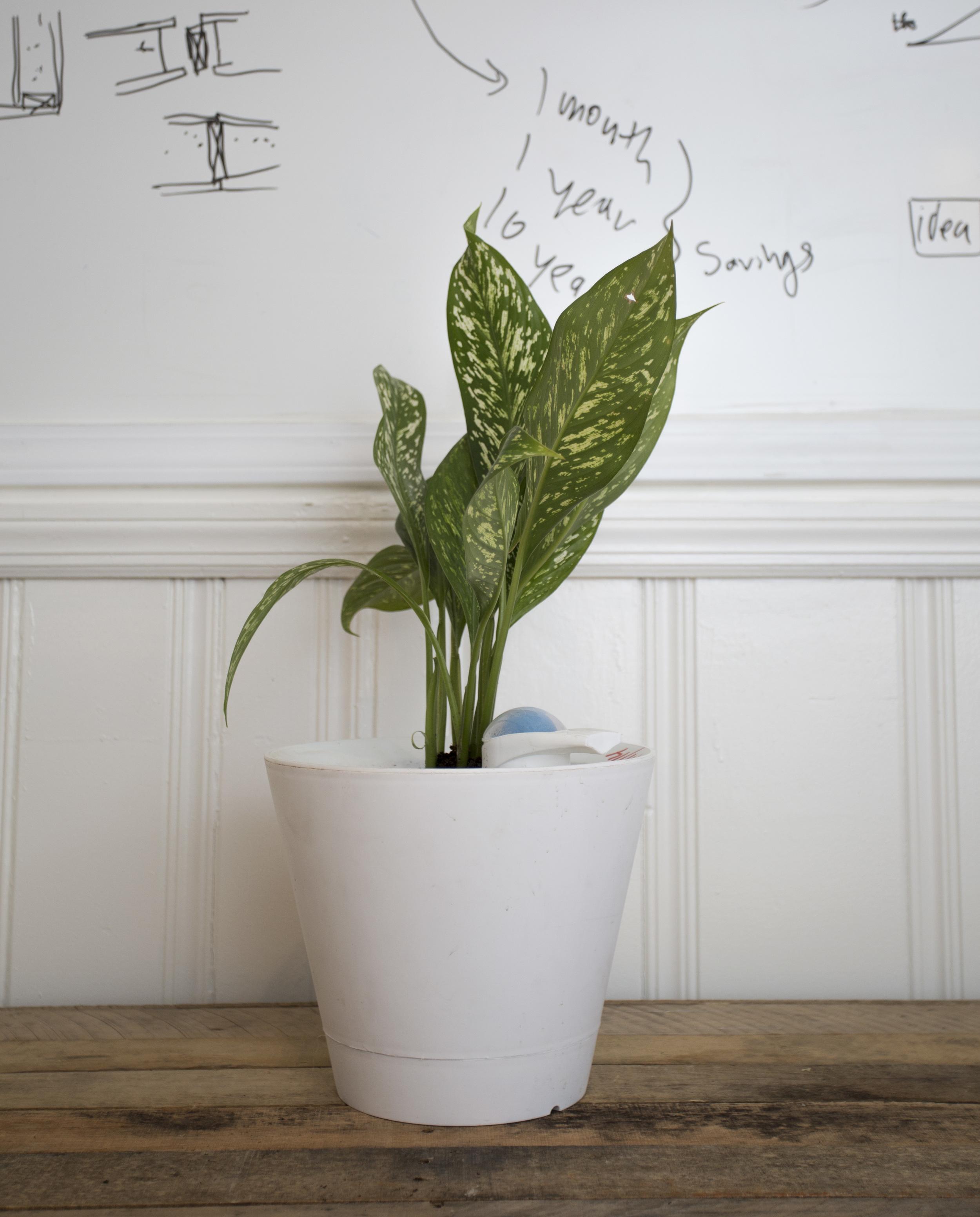 plant-03.jpg