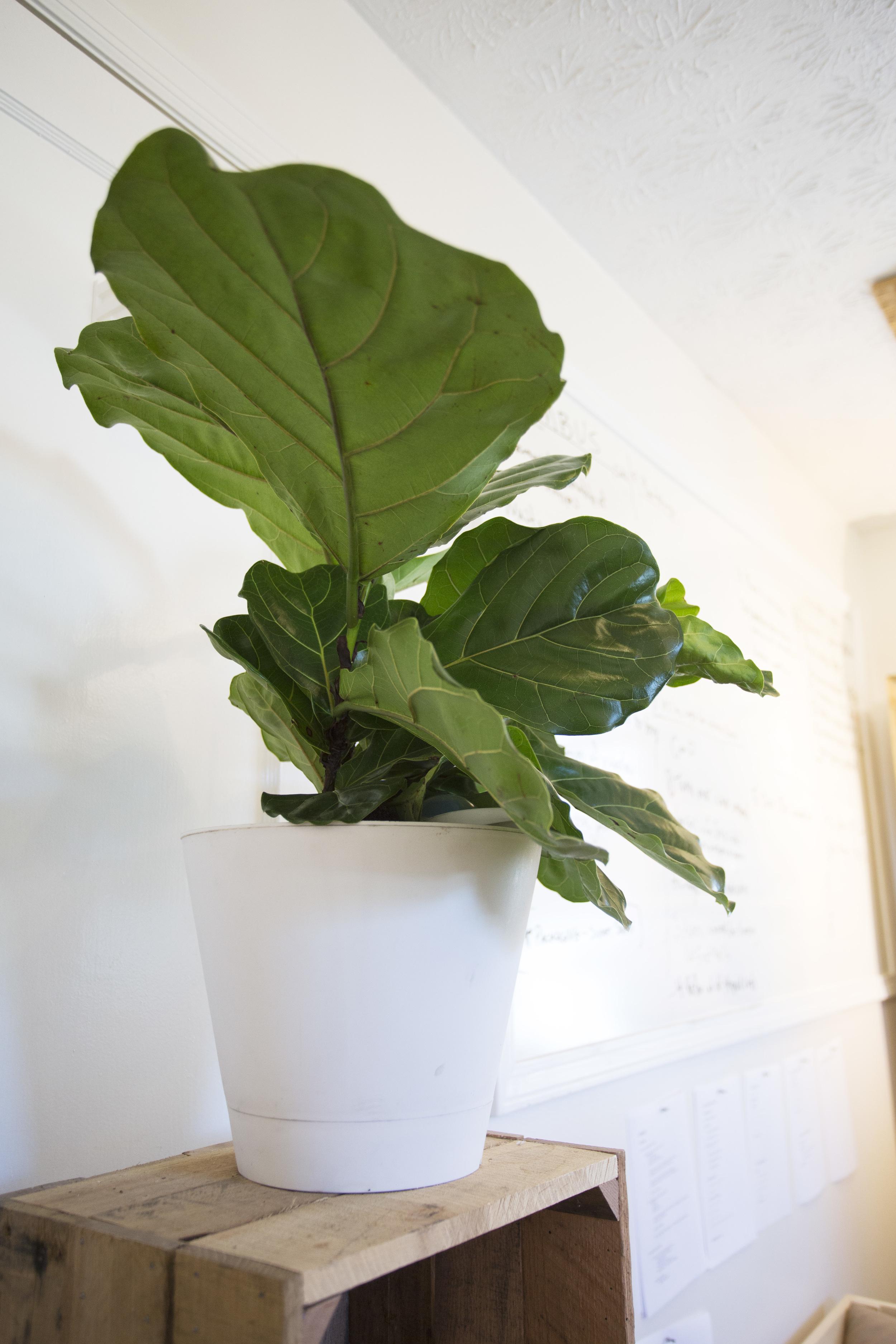 plant-01-b.jpg