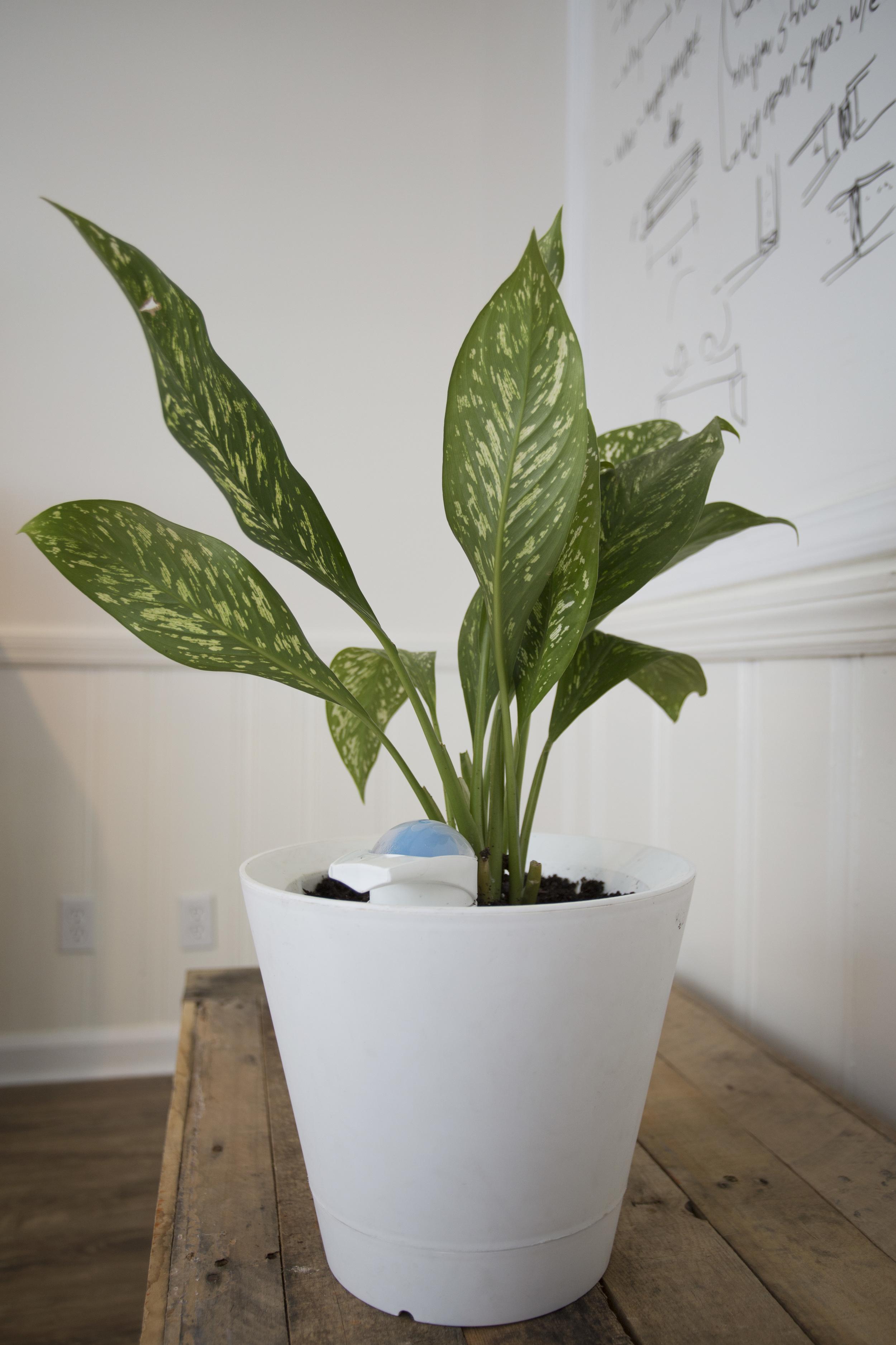 plant-04.jpg