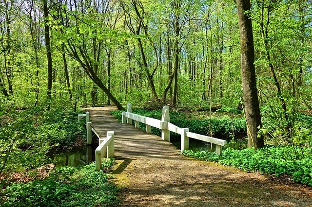 bridge in forest.jpg