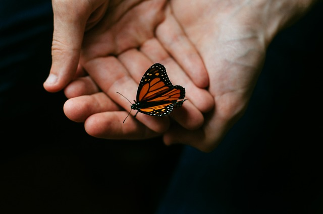 people holding hands with butterfly.jpg