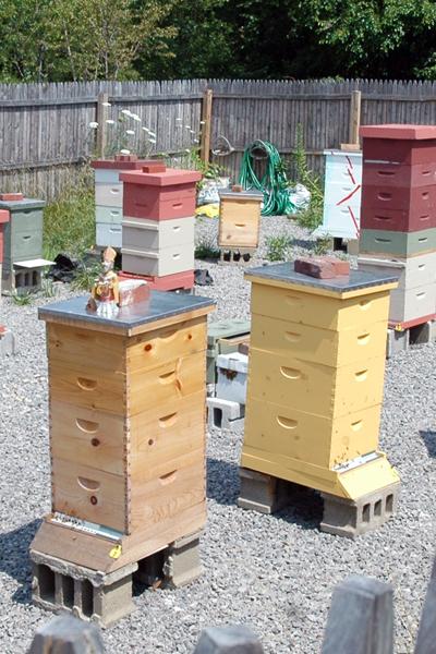 The Buzz About Raw Honey | Apiaries | SavoryPantryBlog.com #raw #honey