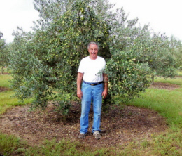 Food in the News: Week of July 23, 2014 | Florida Olive Oil Production | SavoryPantryBlog.com