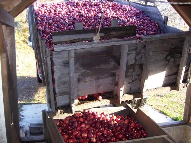 Apples Cider Mill.jpg