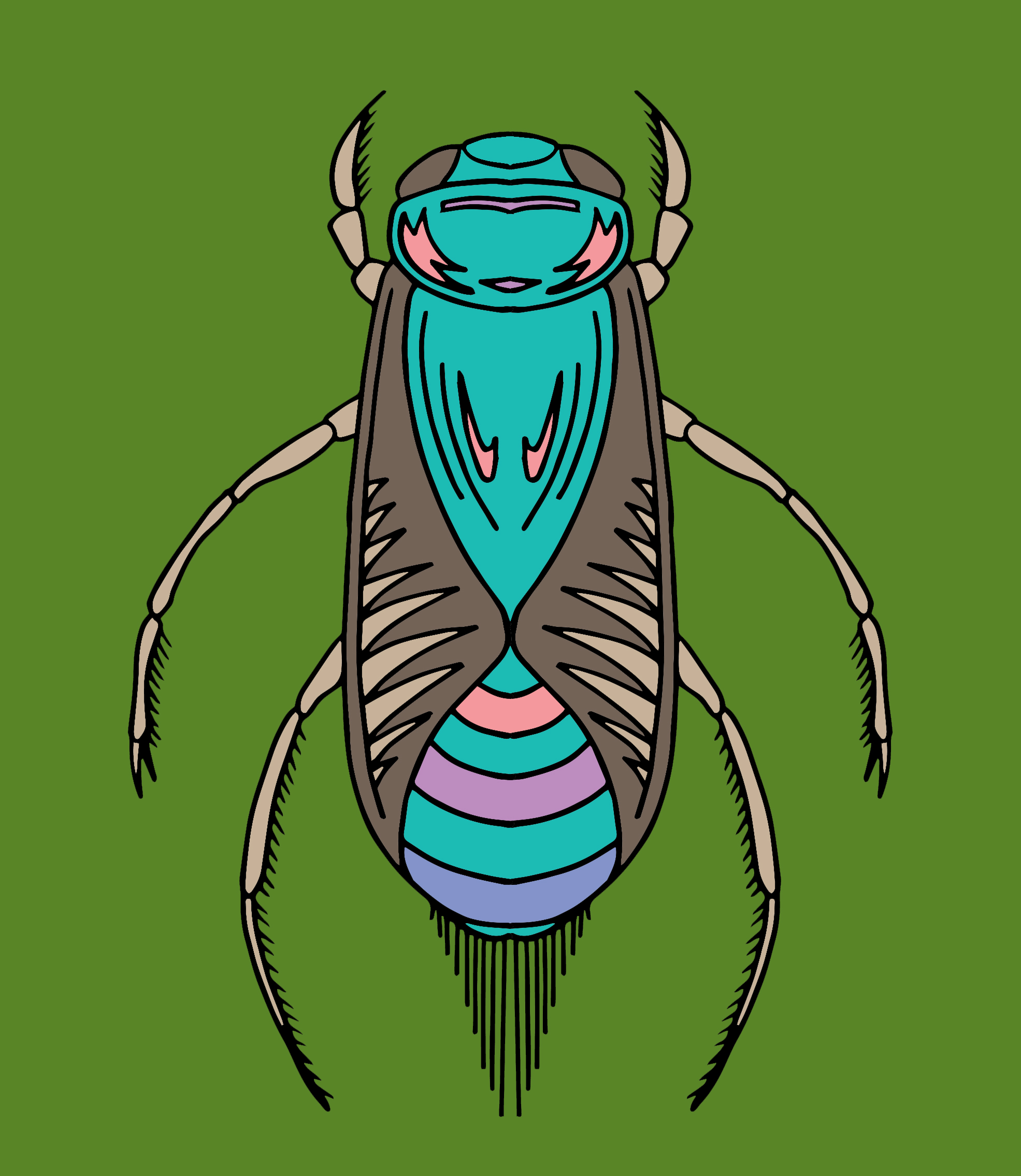 080719 Water Bug Color 1.jpg