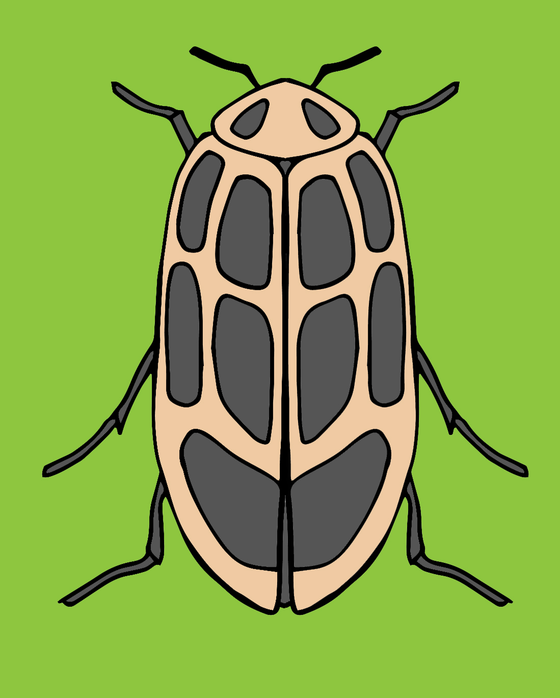 082719 Coleoptera color 1.jpg