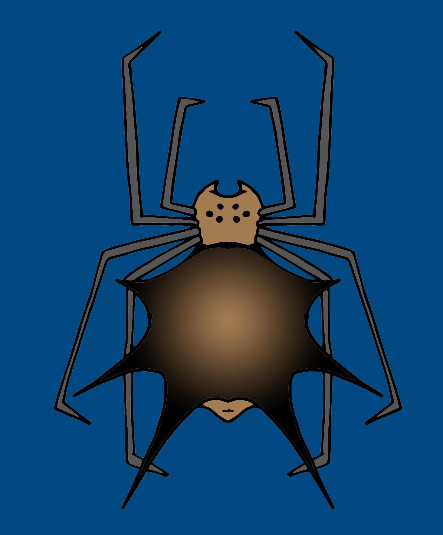 82719 Orb Weaver Color 1.jpg