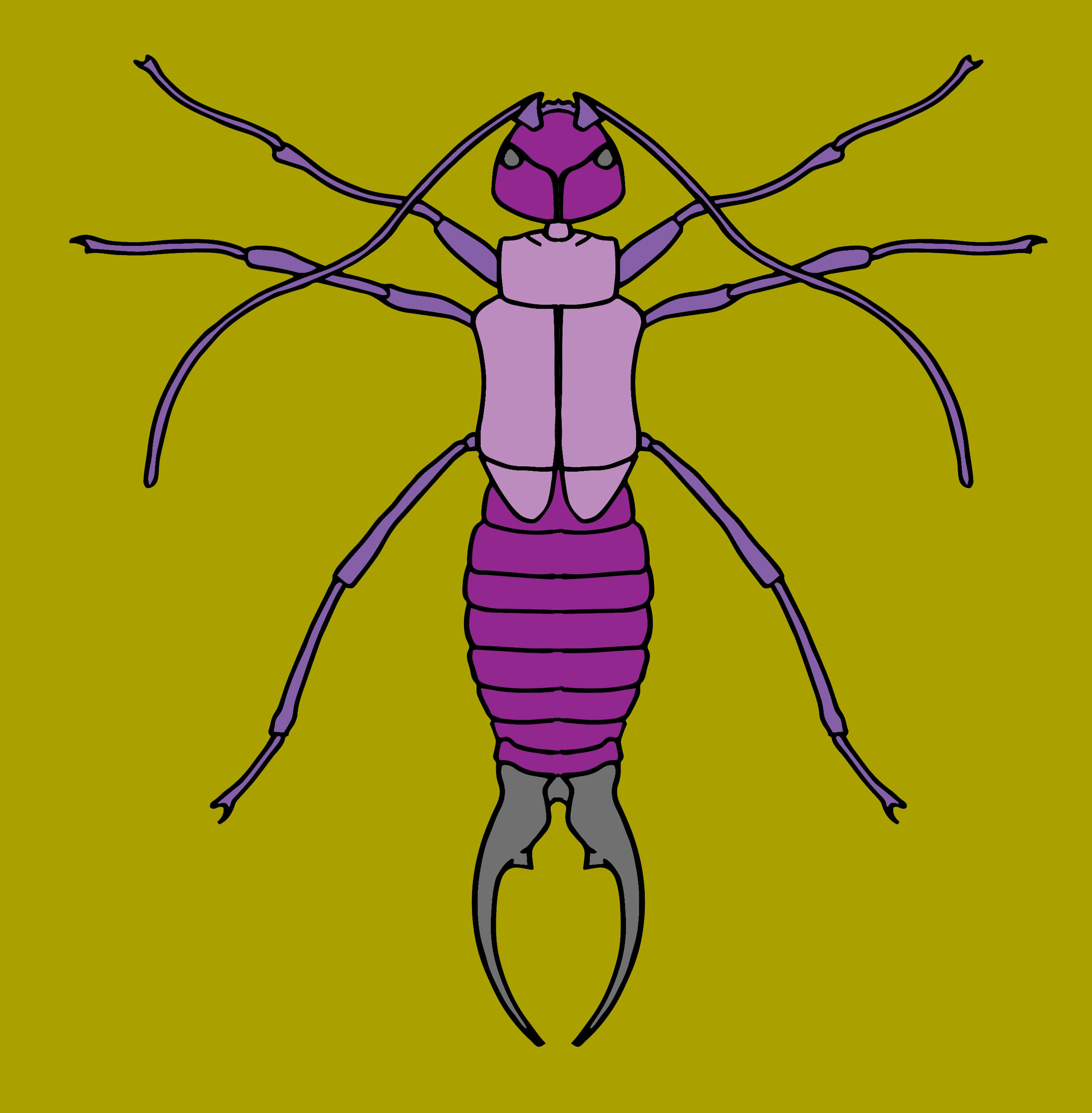 Earwig Color 1.jpg
