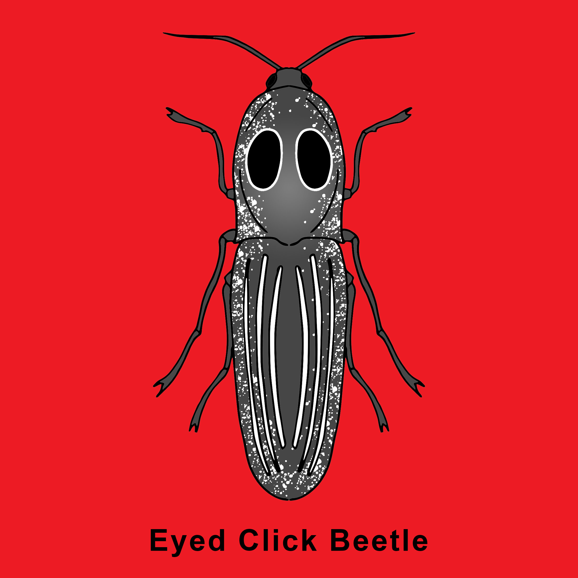 Eyed Click Beetle Finished .jpg