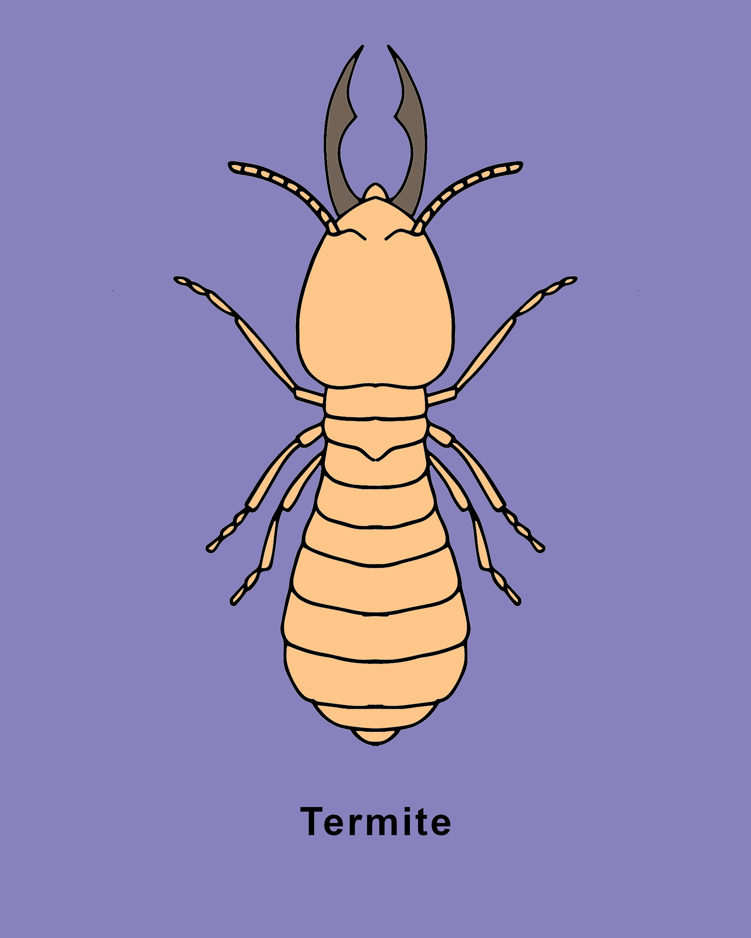 Termite Finished.jpg