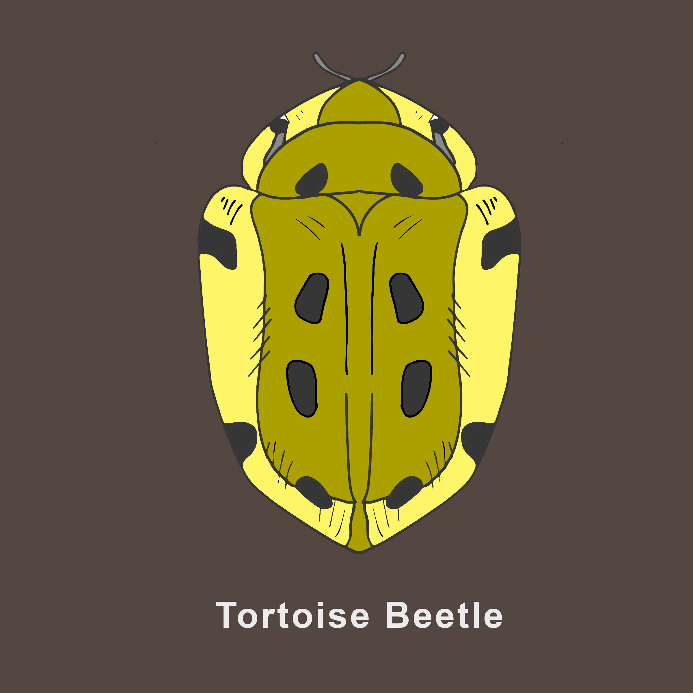 Tortoise Beetle Finished.jpg