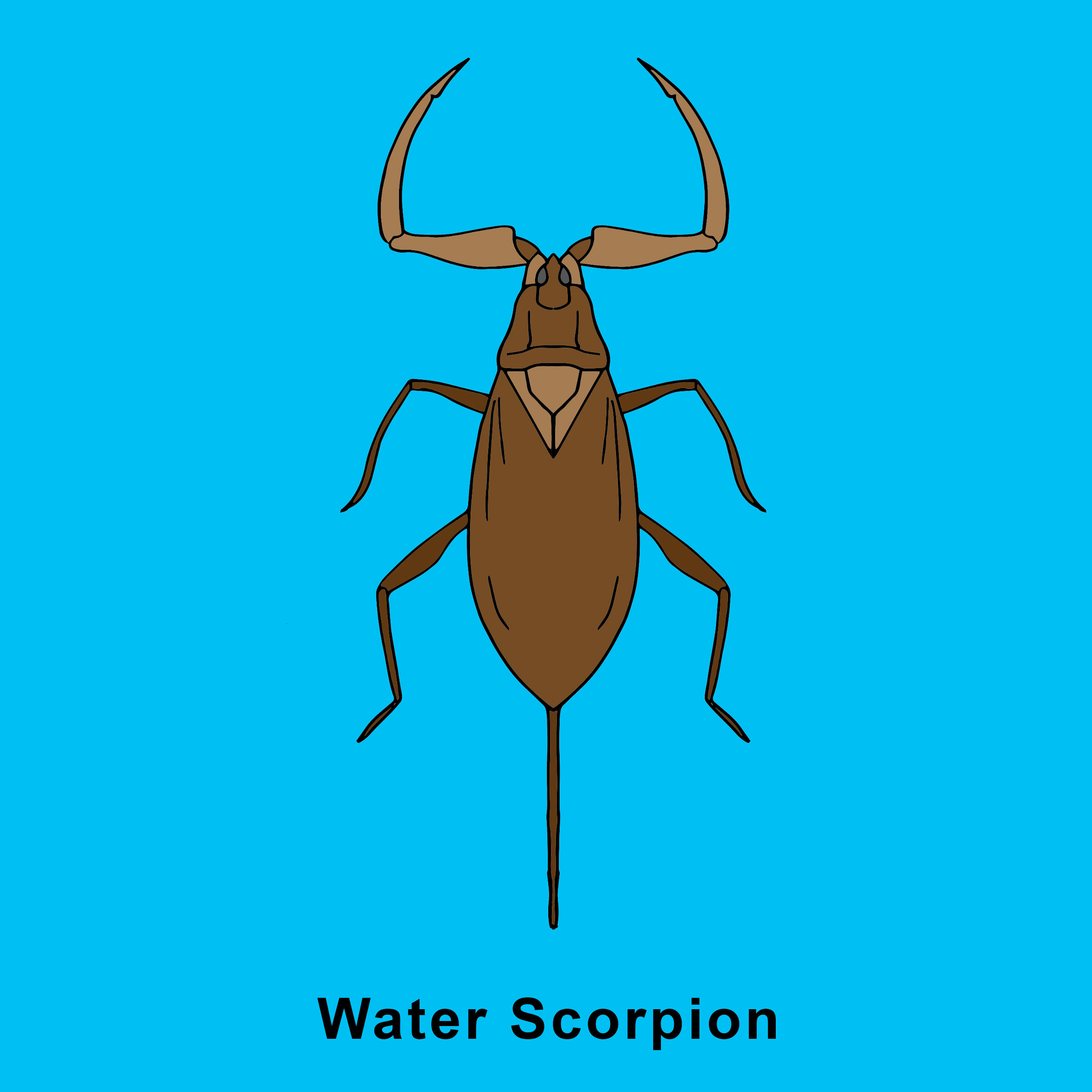 Water Scorpion Finished.jpg