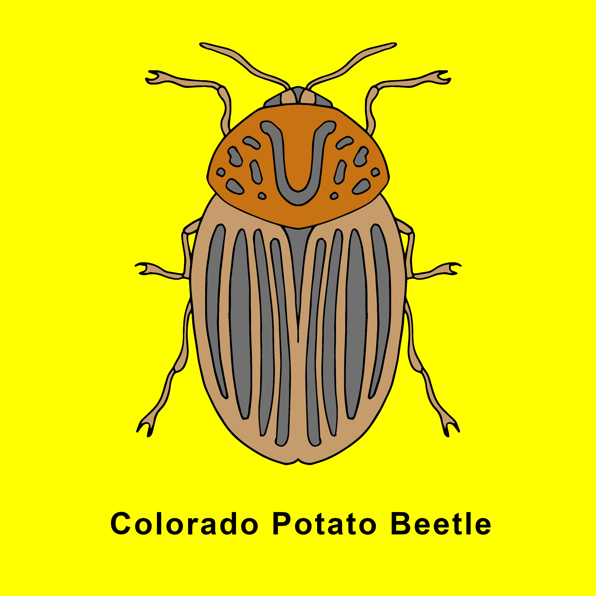 Colorado Potato Beetle Beetle.jpg