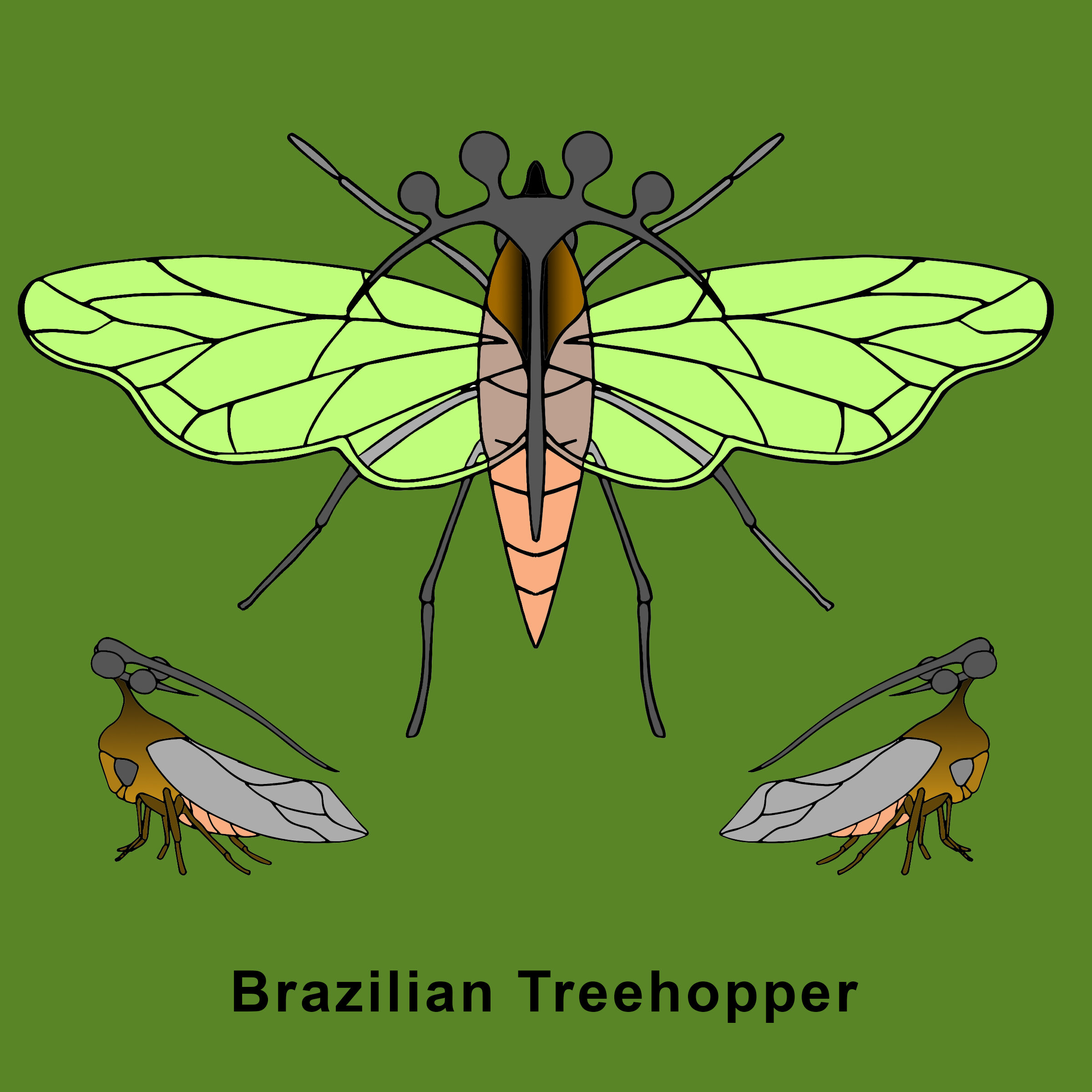 Brazilain Treehopper Finished .jpg