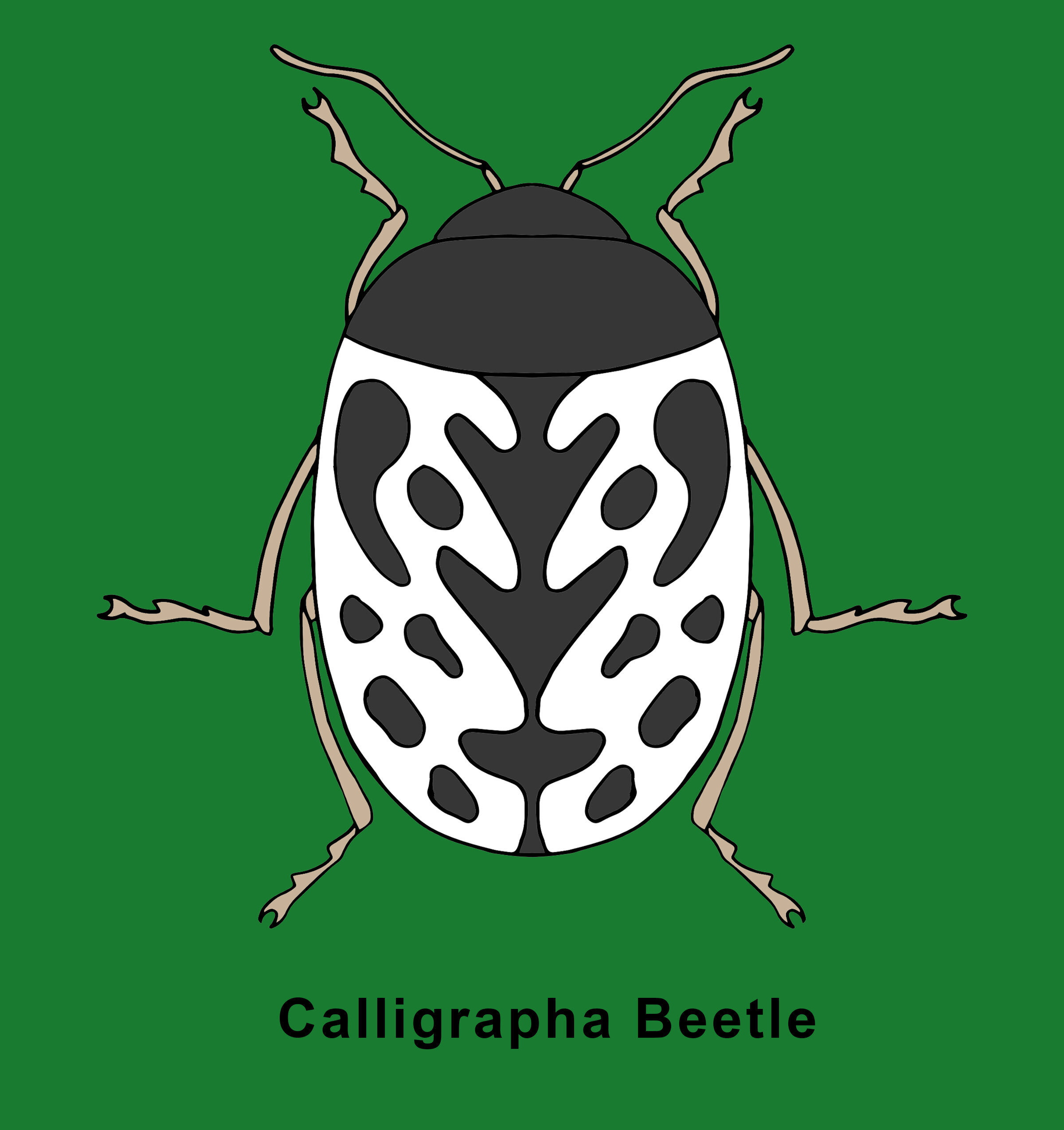 Calligrapha Beetle Finished.jpg