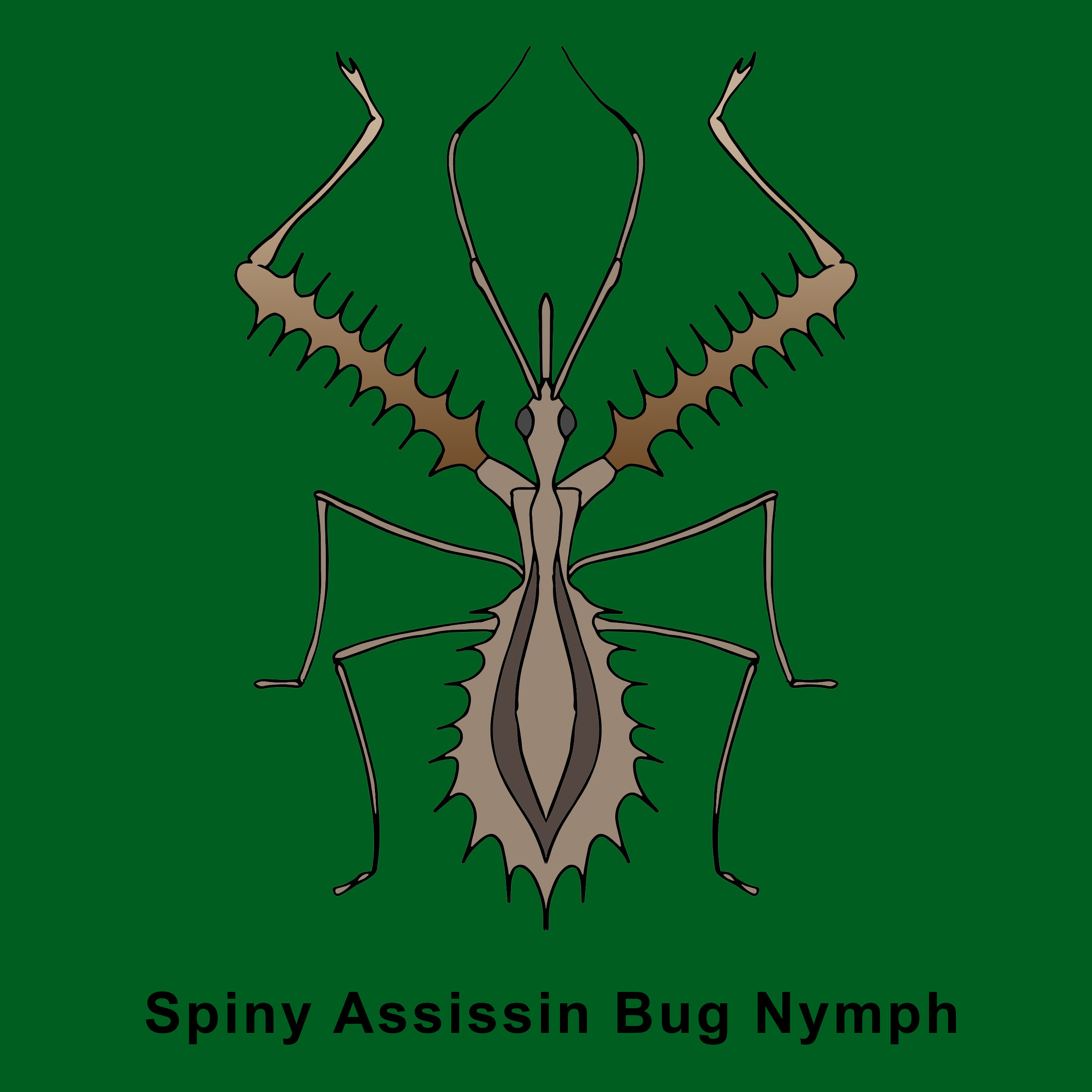 Spiny Assissin Nymph.jpg