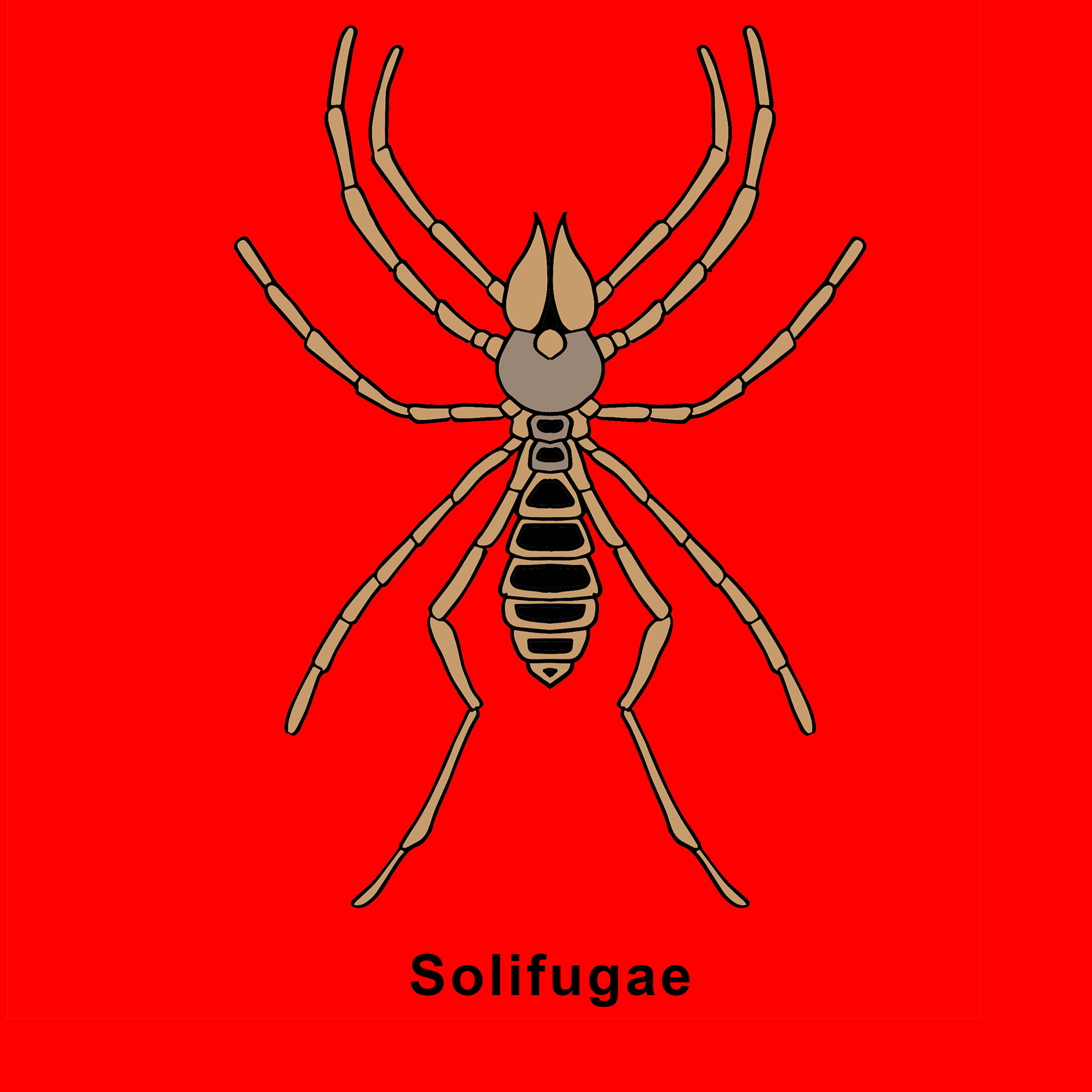 9.24.19 Solifugae (Camel Spider) Finished.jpg