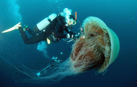 060119_jellyfish