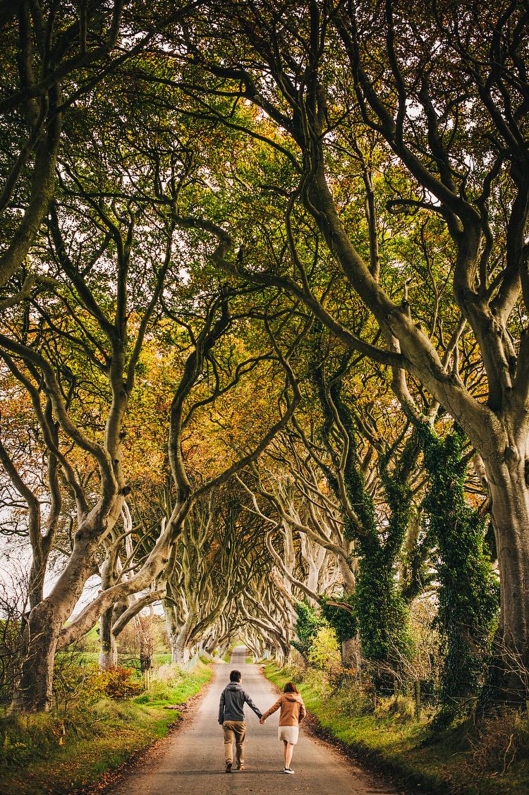 the dark hedges northern ireland