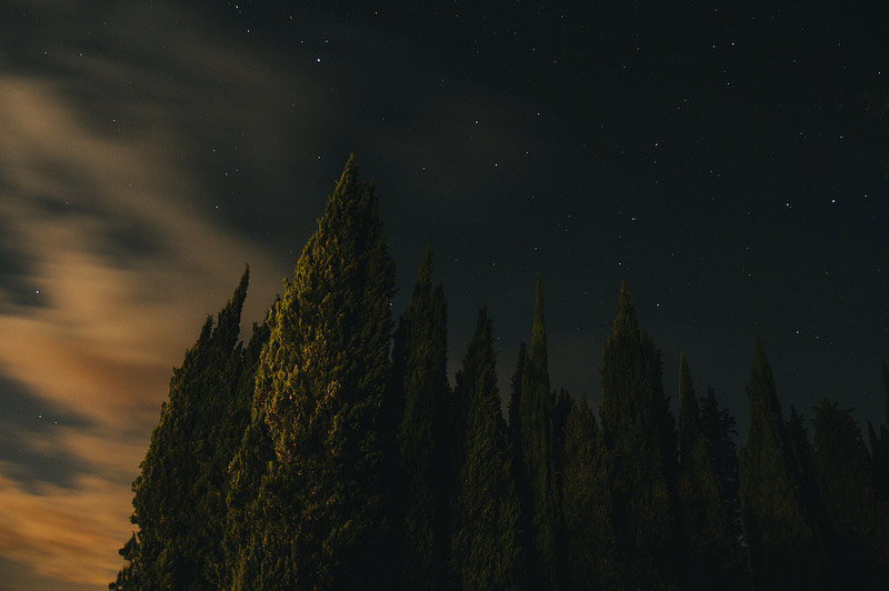 tuscany night trees