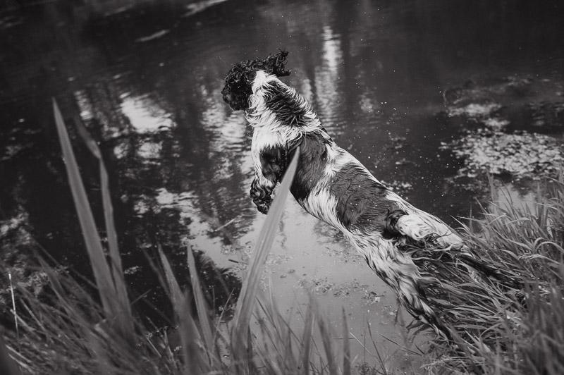 wedding-photographers-ireland-201.jpg