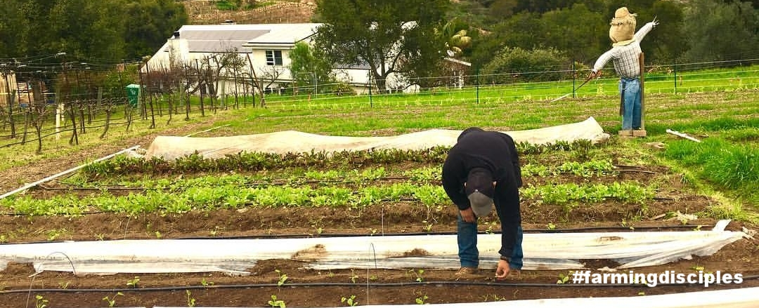 Our right hand man Martin working on Zucchinis.