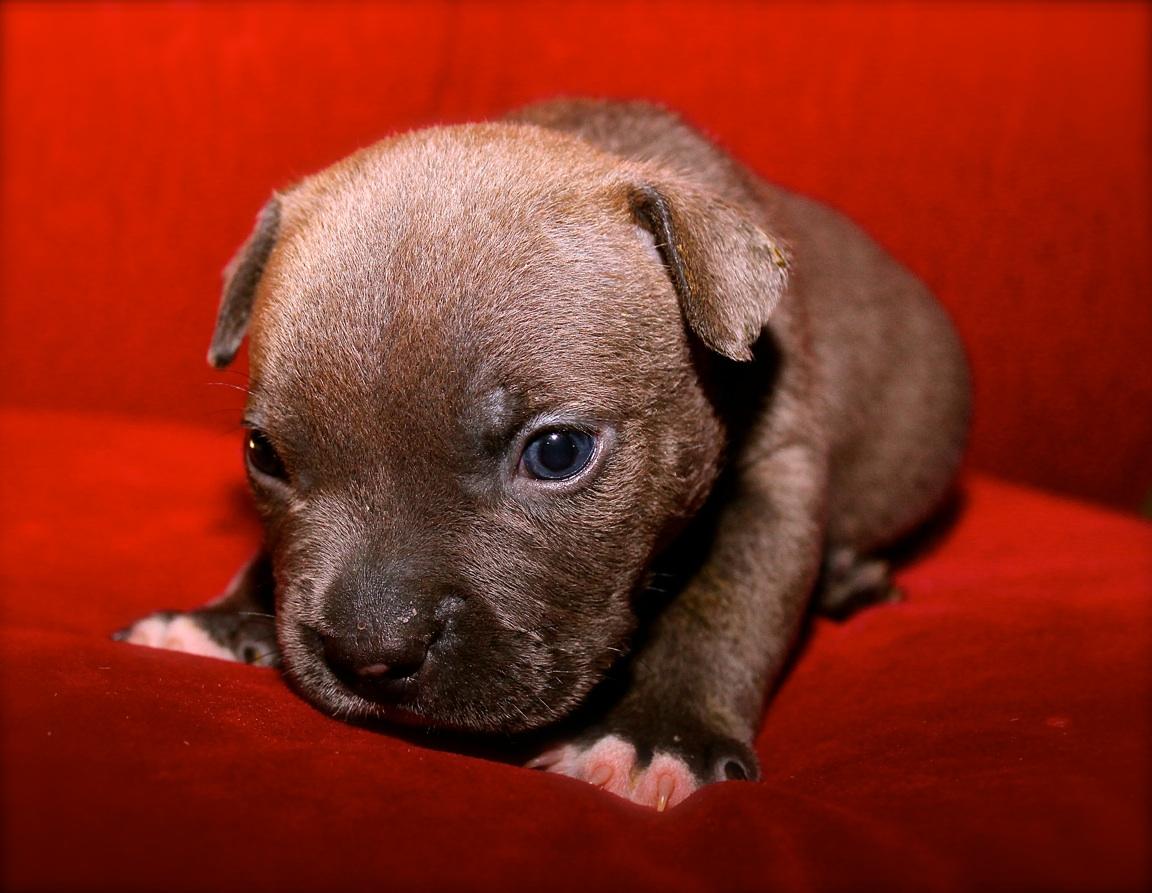 Puppie-Ruby1.jpg