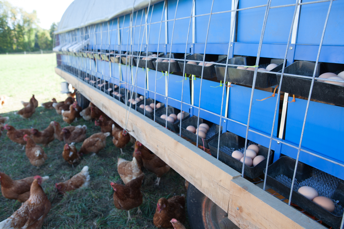 wingate_farm_eggs_alyssa_robb_photography-2.jpg