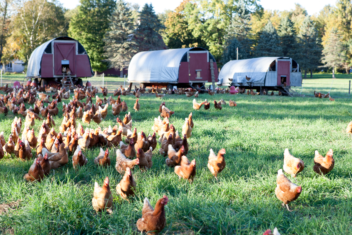 wingate_farm_eggs_alyssa_robb_photography-4.jpg