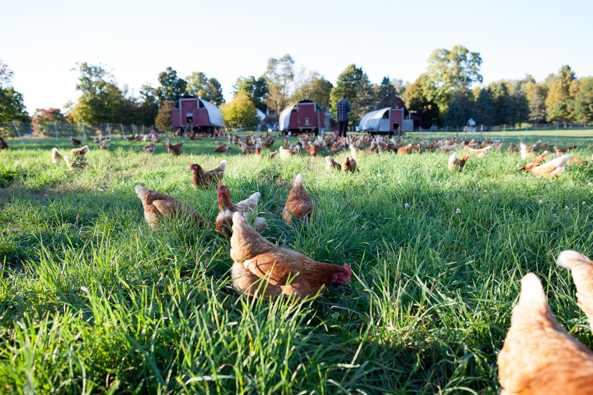wingate_farm_eggs_alyssa_robb_photography-6.jpg