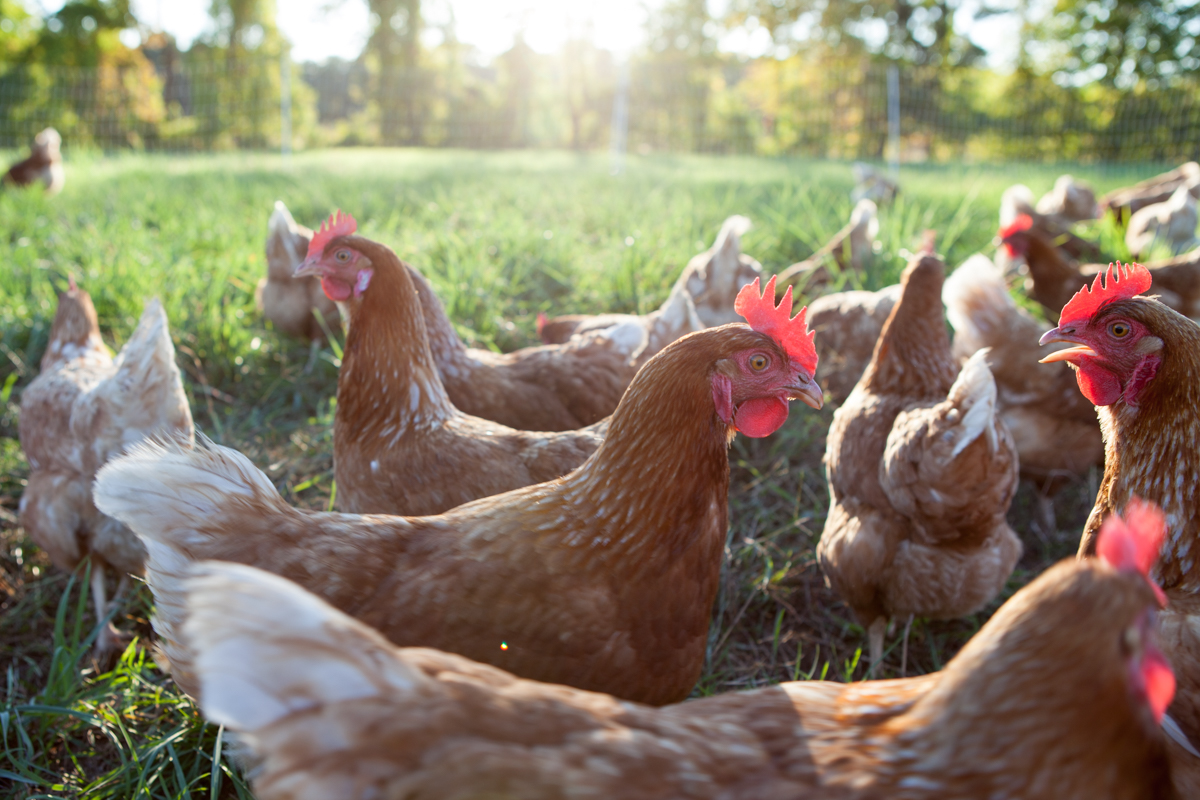 wingate_farm_eggs_alyssa_robb_photography-7.jpg